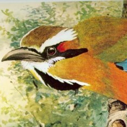 "The header and background images are selected from ""Turquoise-browed Motmot,"" 1903, a painting by the great wildlife artist Louis Agassiz Fuertes. It can be found in Louis Agassiz Fuertes & The Singular Beauty of Birds: Paintings, Drawings, Letters."